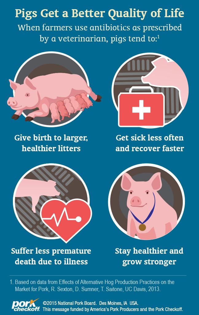 Life Cycle of a Market Pig - Pork Checkoff