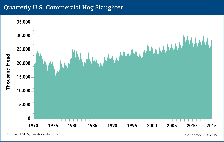 commercial hog slaughter