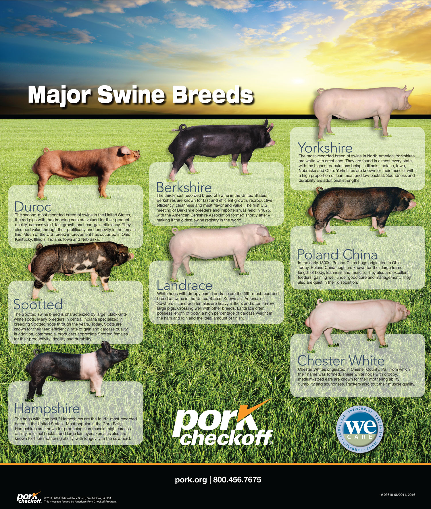 major swine breeds