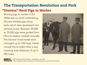 drovers herd market hogs