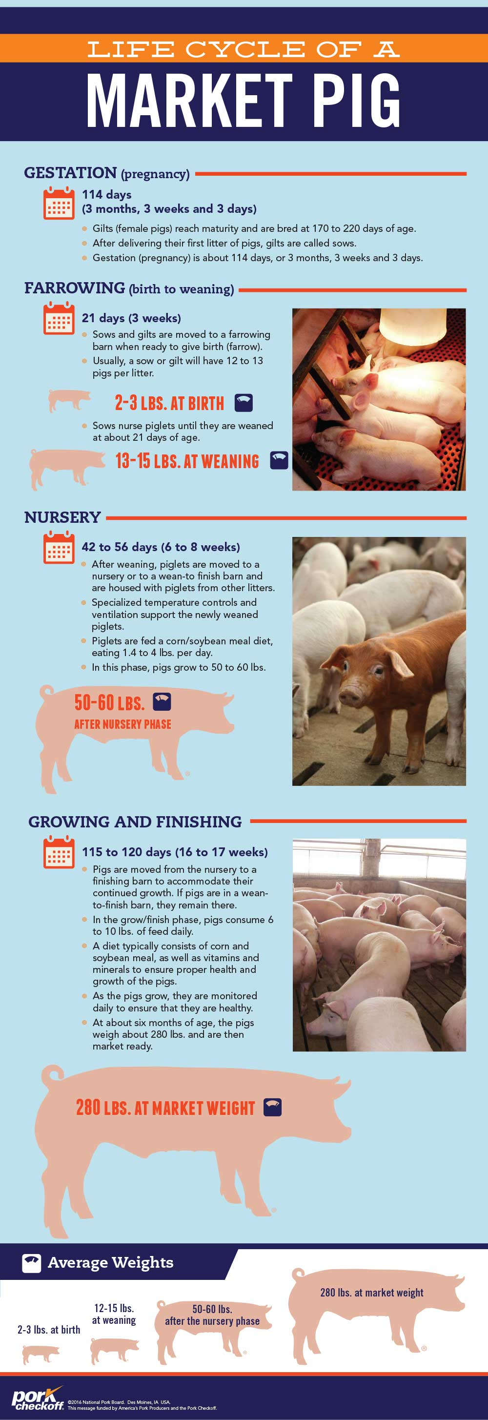 What Responsible Antibiotic Use Means on a Pig Farm